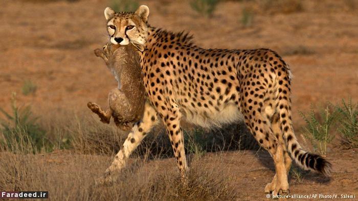 تحقیق حیات وحش ایران